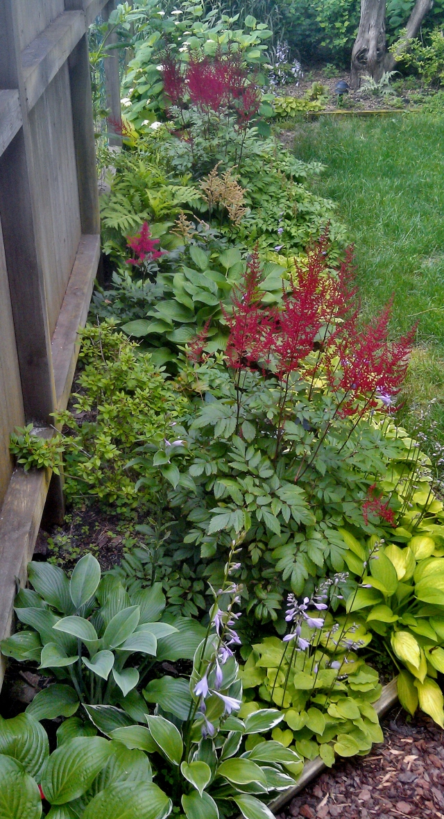 I actually climbed a little ladder to get this shot and Richard and I agree that these are the most astonishing astilbes (tall red spikes) we've ever seen, and the fact that they are still developing and yet to fully bloom, even this late in the year, is amazing. We are now into that part of our garden that was utterly destroyed only three years ago by Superstorm Sandy, and this specific bed - at the lowest point of all - was under 6' of seawater for at least a day. Almost all of this has been replaced and moved around in the meantime, but that big green hosta right in the center is a survivor, as is the hydrangea at the top of the photo.