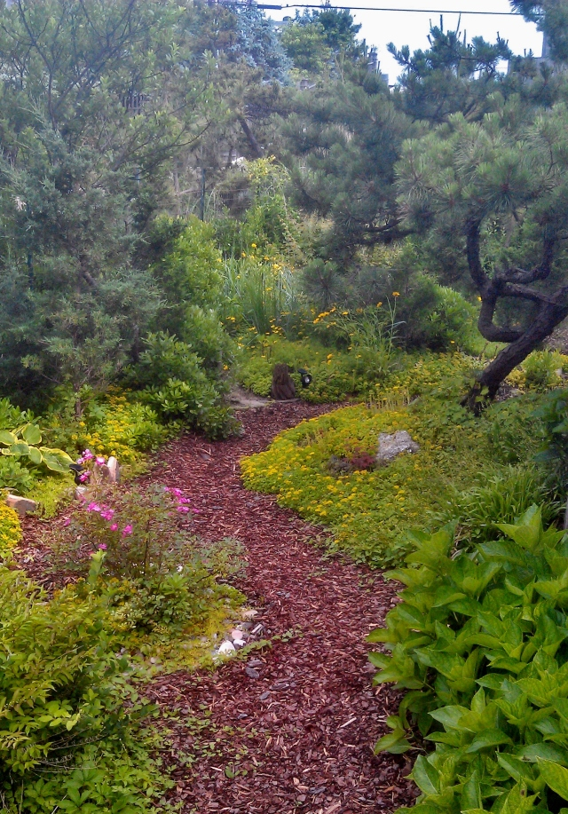 Following the path to the right, a veritable smorgasbord of ground covers, succulents, mosses and herbs play together in beautiful ways.