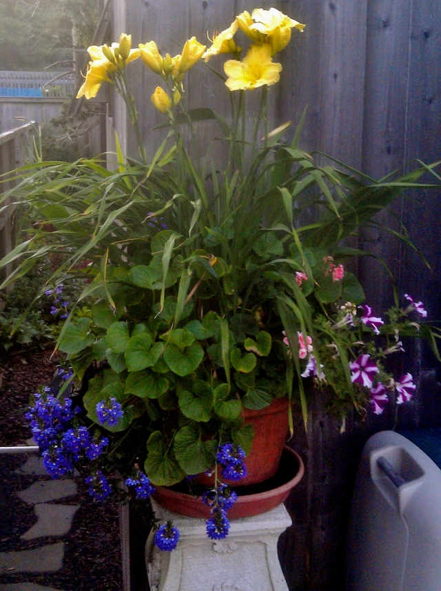 9) This tall, long-blooming yellow variety was a gift from our friends KB and Hunter, along with the violet plant (heart-shaped leaves) that keeps it company.